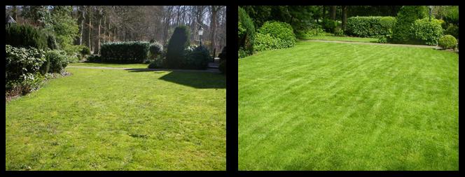 foto 19 voor en tijdens grasonderhoud