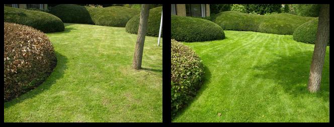foto 20 voor en tijdens gras onderhoud Zoetermeer