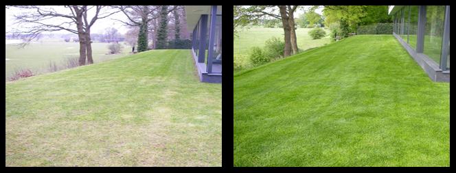 23 foto voor en tijdens grasonderhoud