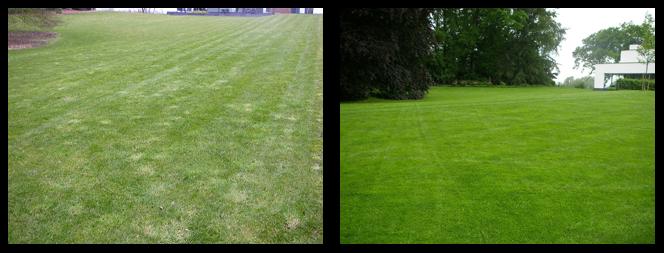 27 foto voor en tijdens grasonderhoud