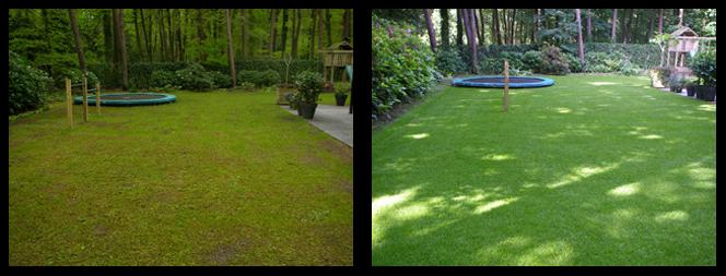 28 foto voor en tijdens grasonderhoud