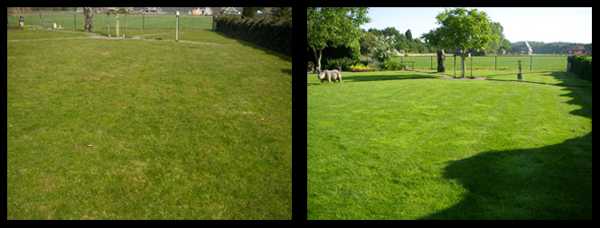 foto 29 voor en tijdens grasonderhoud Alkmaar