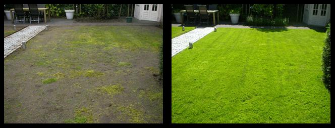 30 foto voor en tijdens grasonderhoud