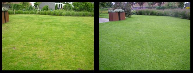 33 foto voor en tijdens grasonderhoud