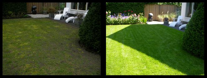 35 foto voor en tijdens grasonderhoud