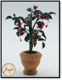 4511 Fuchsia in pot