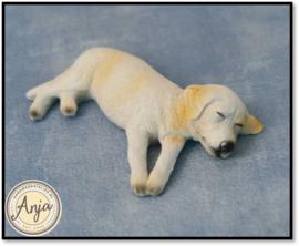 5556 - Slapende labrador