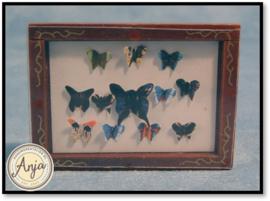 D799 - Vlinders in vitrine