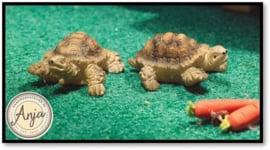 9215 Twee schildpadden