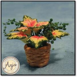 Plant in pot D1280
