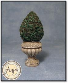 2939 Buxus in pot