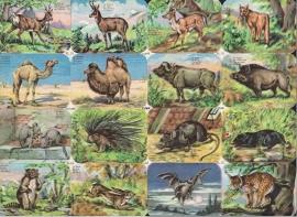 Editions Chagor Liege No 31939 - Plaat III Wilde dieren