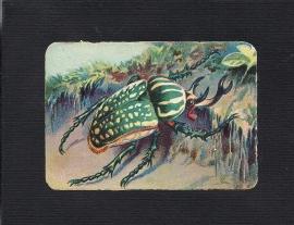 Vierkant antiek poezieplaatje Insekt 5