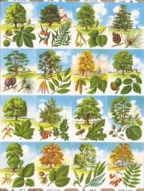 Allerlei bomen poezieplaatjes MLP 1261