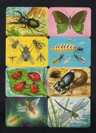 Kruger 99/31 Insecten poezieplaatjes