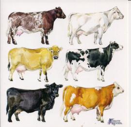 Koeien poezieplaatjes Stickers K55