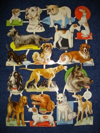 E.O. & Co 5201 Honden poezieplaatjes