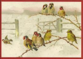 Vogeltjes in de sneeuw Glitter prentbriefkaart [SV 6Wg018]