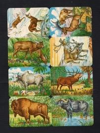 Kruger 99/16 Woudbewoners poezieplaatjes