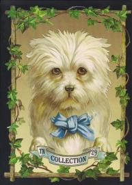 Witte hond met blauwe strik TNC 29 Deense poezieplaatjes