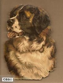 Hondenkop Sint Bernard poezieplaatjes 5032