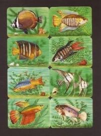 Kruger 99/36 Vissen poezieplaatjes