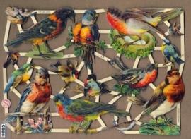 Vogeltjes met Roodborst op nest poezieplaatjes 7281