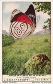 Liebig: Letters en Cijfers bij de Vlinders - Callicore neglecta