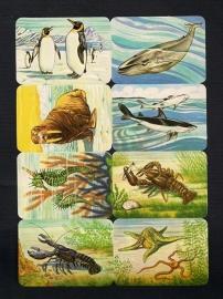 Kruger 99/34 Zwemmende dieren poezieplaatjes