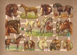 Paarden poezieplaatjes 7378