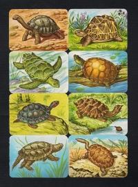 Kruger 99/32 Schildpadden poezieplaatjes