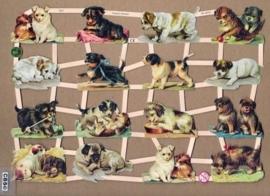 Allerlei rassen hondjes poezieplaatjes GL7327