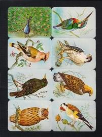 Kruger 99/2 B Zangvogels met pauw poezieplaatjes