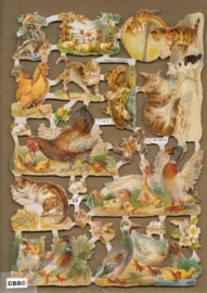 Kippen, eenden, poezen en andere poezieplaatjes 7165