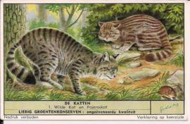 Liebig: De Katten - Wilde kat en Pajeroskat