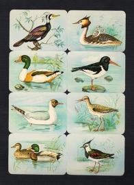 Kruger 99/3 B Watervogels met Kievit poezieplaatjes