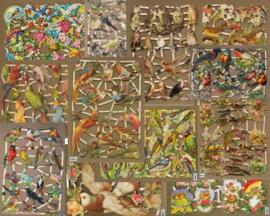 Poezieplaatjes Vogels