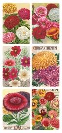 Chrysanten poezieplaatjes Stickers Y130