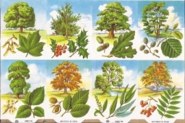 Allerlei bomen poezieplaatjes MLP 1261 B