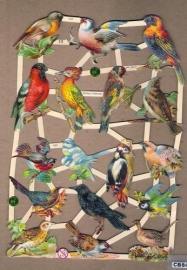 Vogels met specht poezieplaatjes 7323