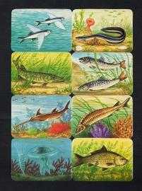 Kruger 99/33 Vissen met Kwal poezieplaatjes