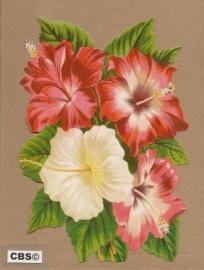 Hibiscus poezieplaatjes 5104