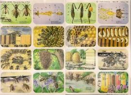 Editions Hemma Serie 39 - Tableau 239 Bijen - Honing