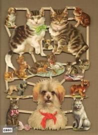 Poezen en honden poezieplaatjes 7238