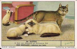 Liebig: De Katten - Kat van Abessinië en Birmaanse kat