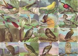 Editions Chagor Liege No 31939 - Plaat XIII Vogels