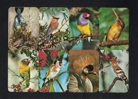 Kruger 99/29 Kleurrijke vogels poezieplaatjes