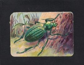 Vierkant antiek poezieplaatje Insekt 6
