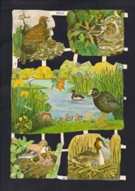 Allerlei vogels met jongen poezieplaatjes MLP 1707