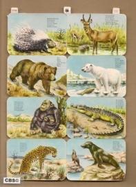 Wilde dieren poezieplaatjes EAS 3113
